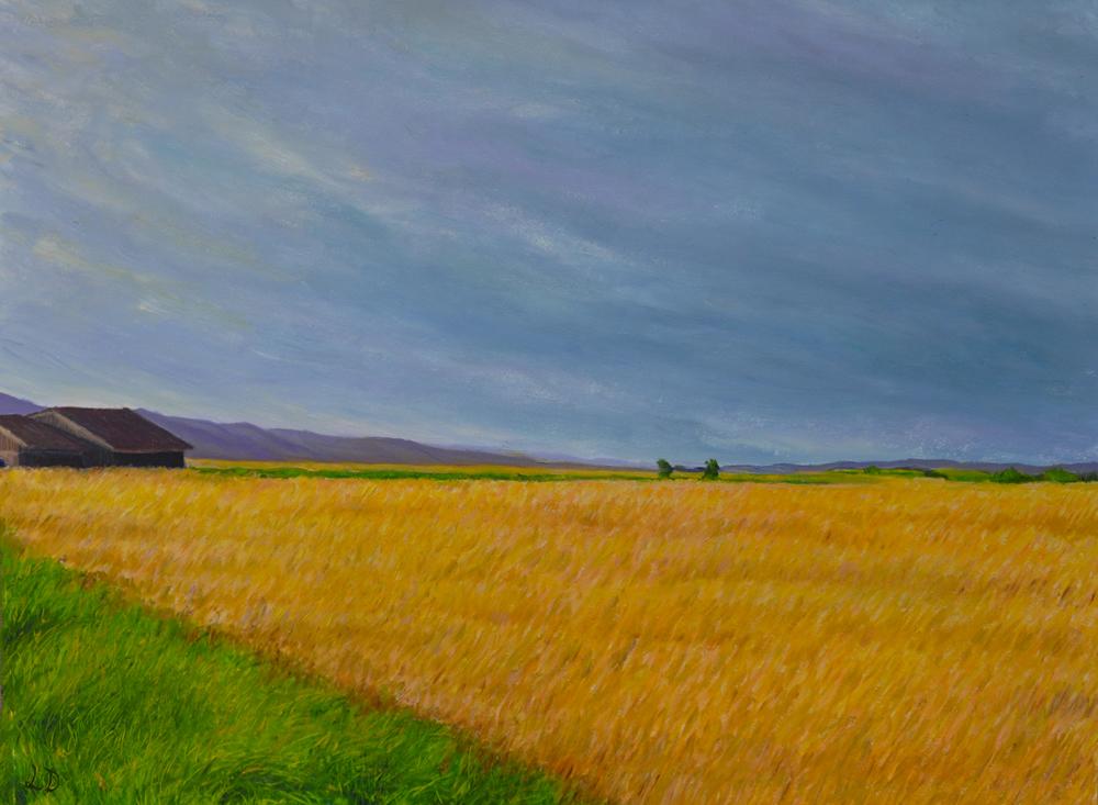 Champ de blé, Cossonay. Huile sur papier, 60x75, 2016