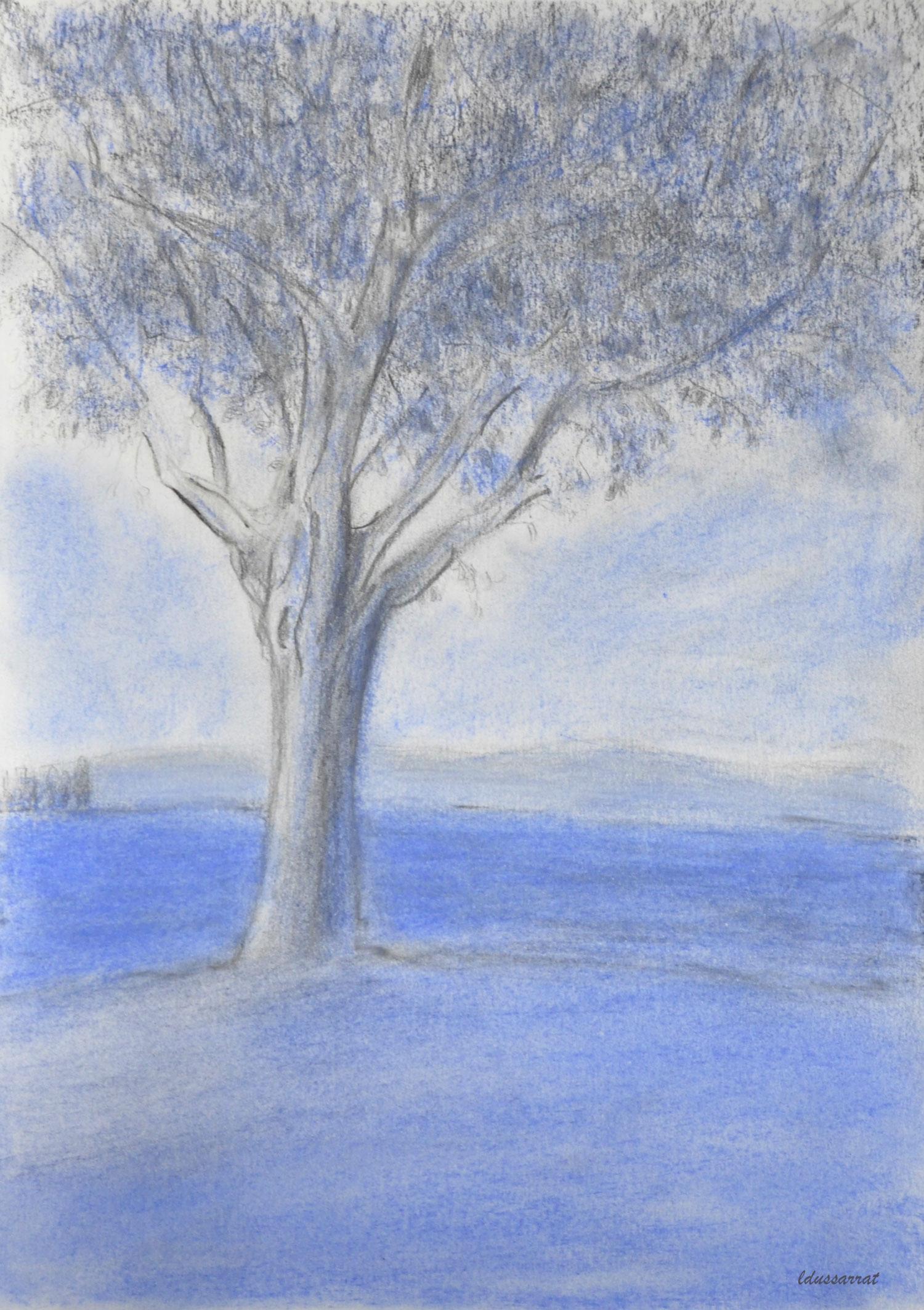 L'arbre, St Prex. Crayon et pastel, 30x21, 2021